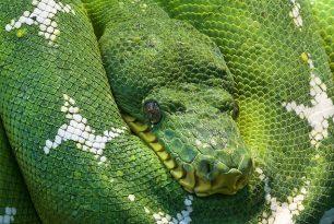 Matlab versus Python – in numerical analysis